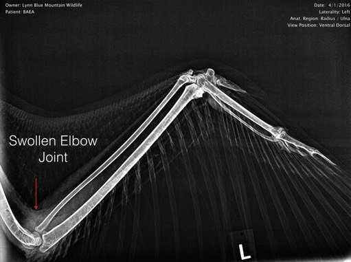 BAEA 16-072 elbow.001.jpg